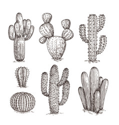 hand drawn cactus western desert cacti mexican vector image