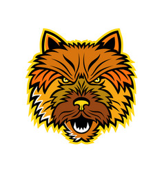 norwich terrier mascot front vector image