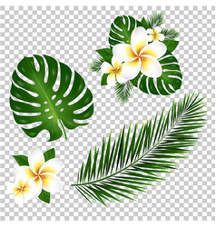 Palm and monstera tree leaf vector