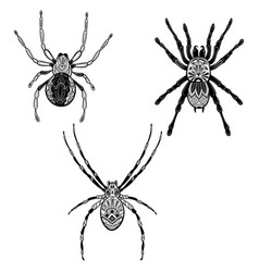 Set spiders with in zentangle style vector