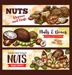 Sketch banners of nuts and beans vector