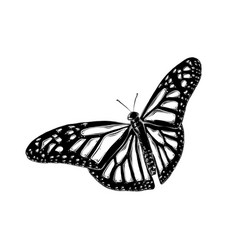 hand drawn sketch of butterfly in black color vector image