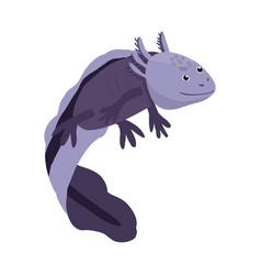Isolated object lizard and axolotl symbol set vector