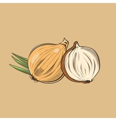 Onion in vintage style Colored vector image