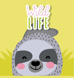 sloth wildlife animal cartoon vector image