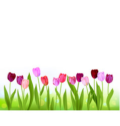 Tulip spring banner isolated vector