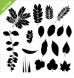 Set of silhouette leaves vector image vector image