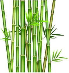 bamboo3 vector image