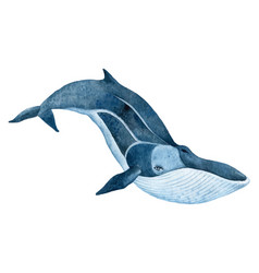 Fin whale vector