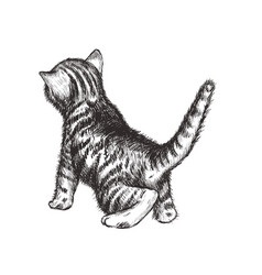 kitten hand drawing vector image
