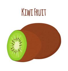 tropical fruit exotic kiwiflat style vector image