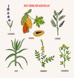Best herbal remedies for acid reflux vector