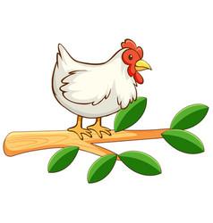 Chicken on white background vector