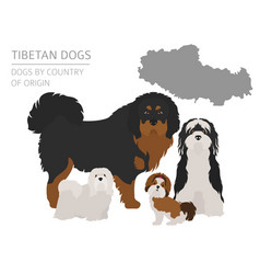 Dogs by country of origin tibetan dog breeds vector