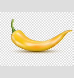 fresh yellow hot chili pepper kitchen organic vector image