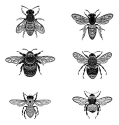set bees in zentangle style collection of vector image