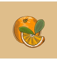 Orange in vintage style Colored vector image