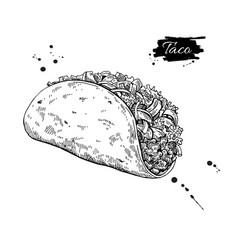 taco drawing traditional mexican food vector image