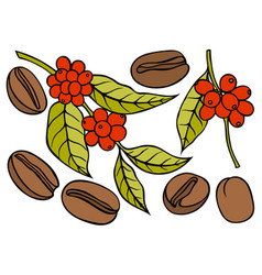 coffee branch with leaf and berry vector image