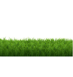 Grass border isolated white background vector