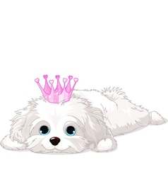 Havanese Puppy with crown vector image