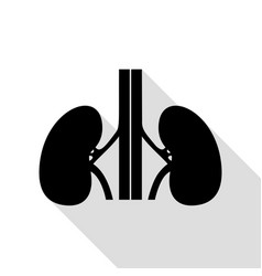 human kidneys sign black icon with flat style vector image