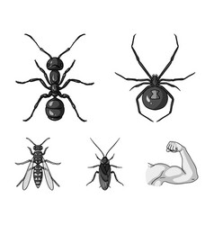 Spider ant wasp bee insects set collection vector