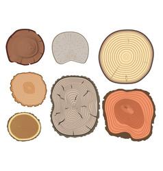 Tree wood trunk slice texture circle cut wooden vector