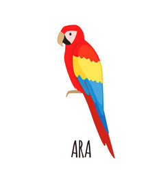 cute ara parrot in flat style vector image