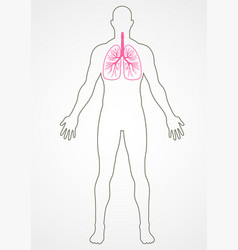human internal organ vector image