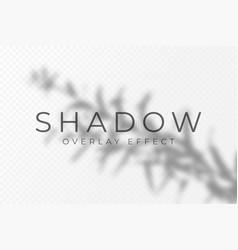 shadow overlay effect transparent soft light vector image