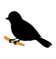tit bird vector image