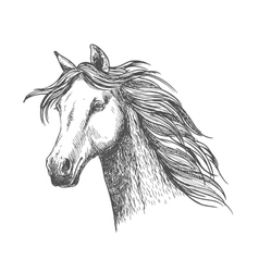 White graceful horse with mane sketch portrait vector