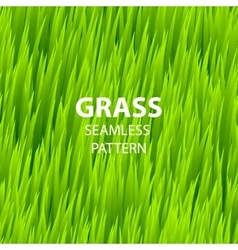 Green grass seamless pattern vector image