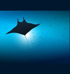 Big manta ray in ocean water underwater life vector