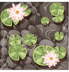 beautiful lily lotus with green leaves vector image