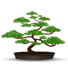 bonsai vector image