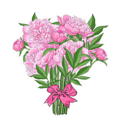 bouquet of pink peony flowers tied with ribbon vector image