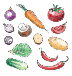 Colored sketch hand drawn vegetables collection vector