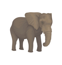 elephant wild safari animal on vector image