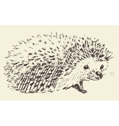 Hedgehog engraving style vintage drawn sketch vector