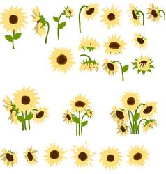set cartoon sunflowers vector image