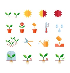 Seeding and planting instructions steps pruning vector image