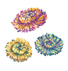 asters flowers set floral elements for decoration vector image