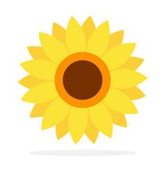 flower sunflower flat isolated vector image