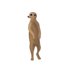 Meerkat wild african animal on vector