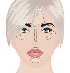 where to apply highlighter strobing vector image