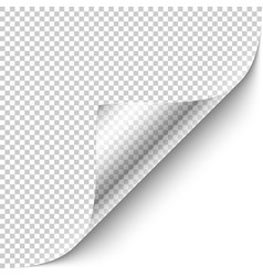 curled corner with shadow vector image vector image