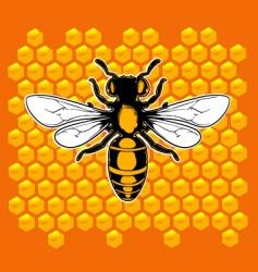 realistic bee vector image vector image