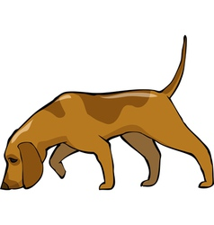 bloodhound dog vector image vector image
